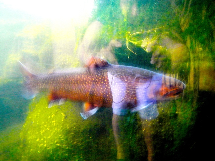 Fish reflected in glass