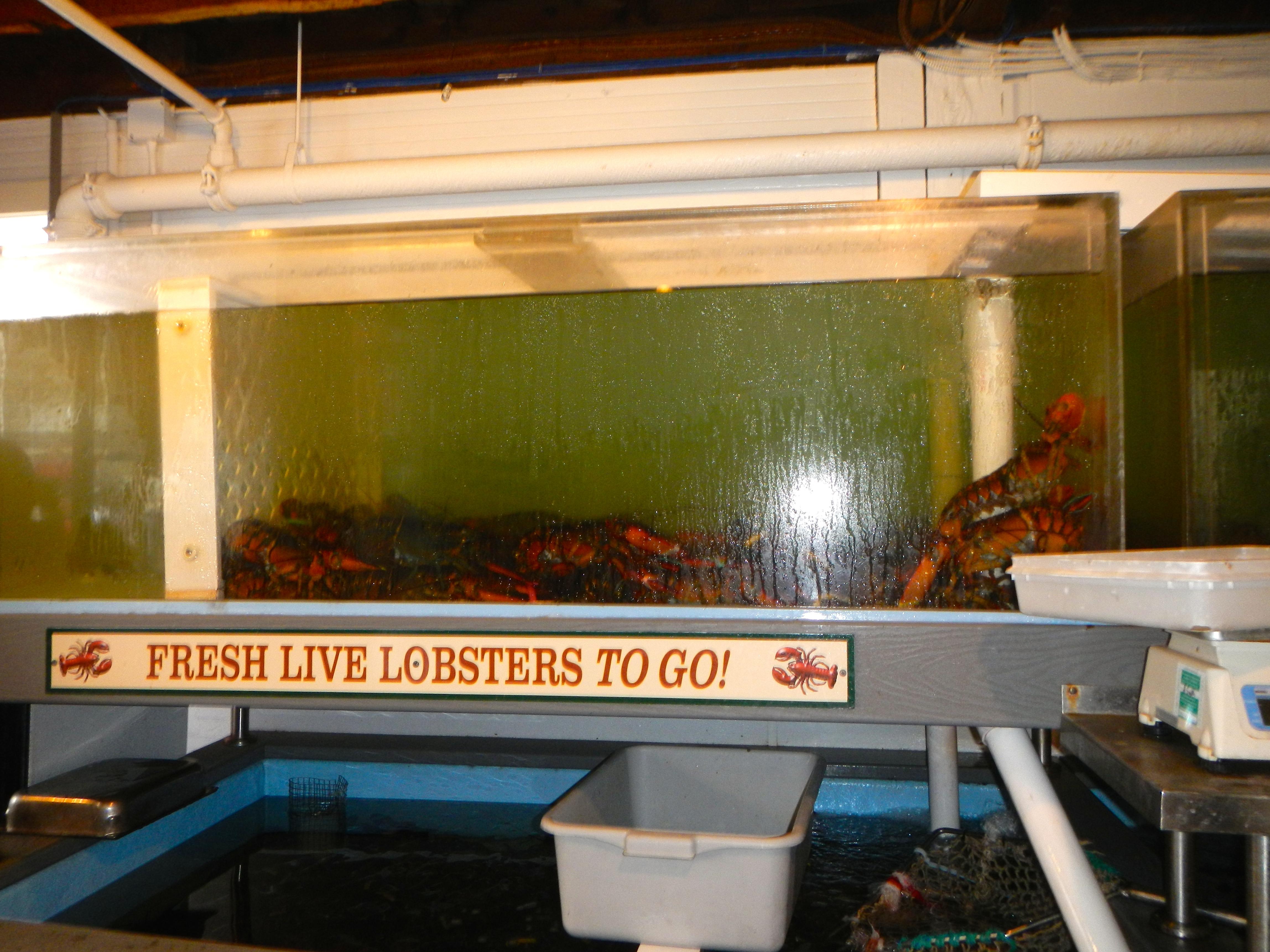 Fresh lobsters at Lobster Pot