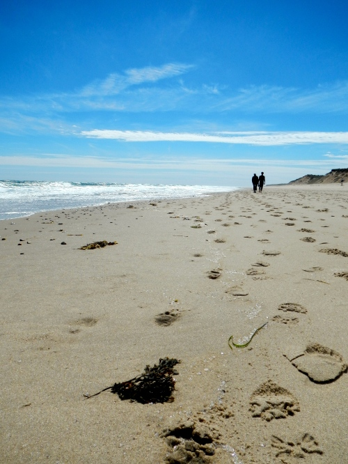 Hiking the beach along Cape Cod National Shoreline