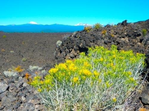 Lava Land flowers