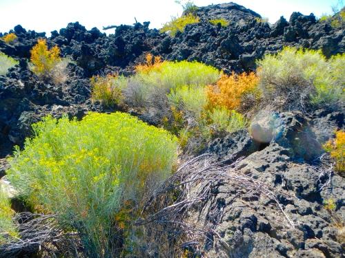 Lava Land wildflowers