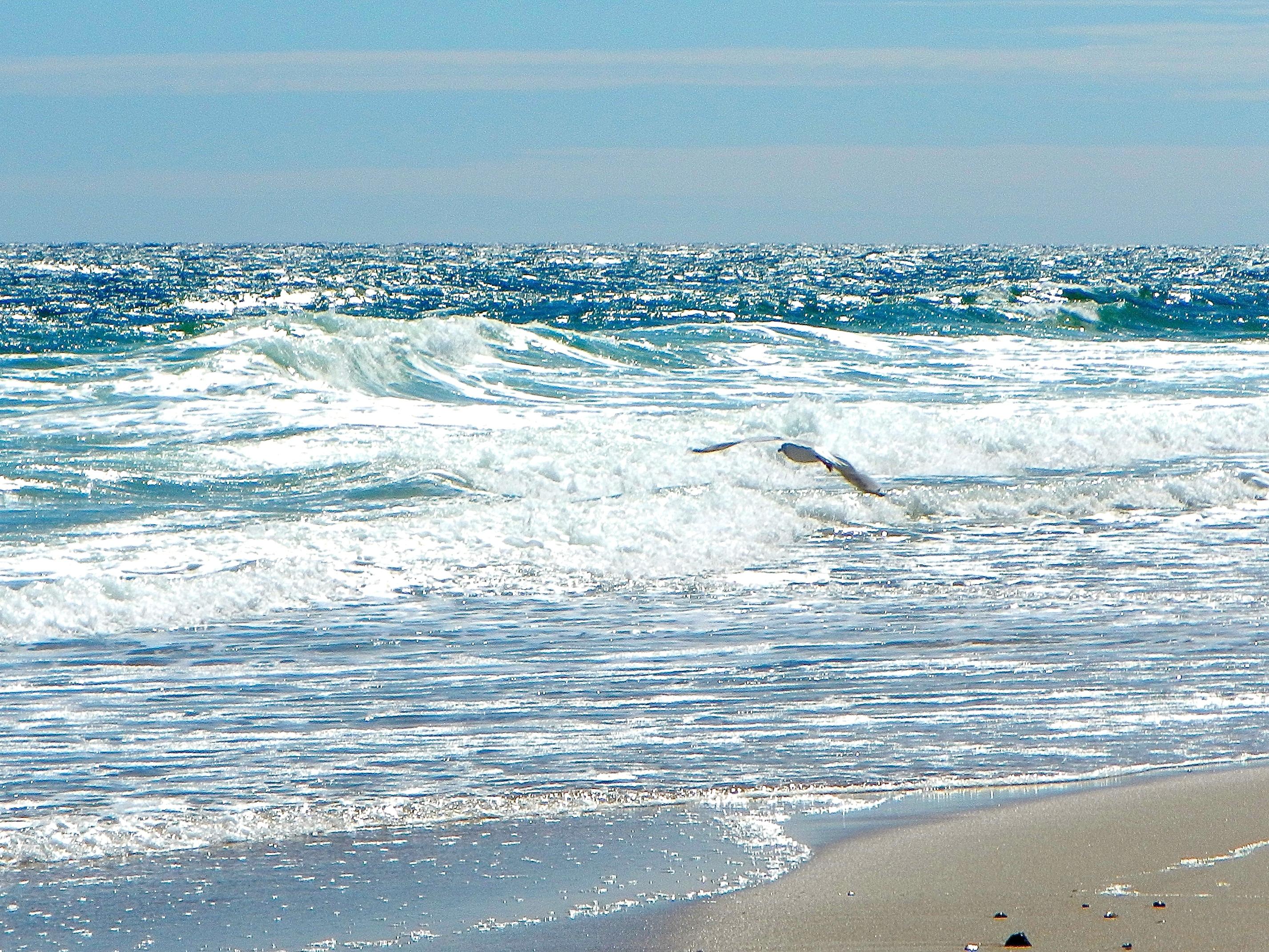Lonely gull along Cape Cod Shoreline