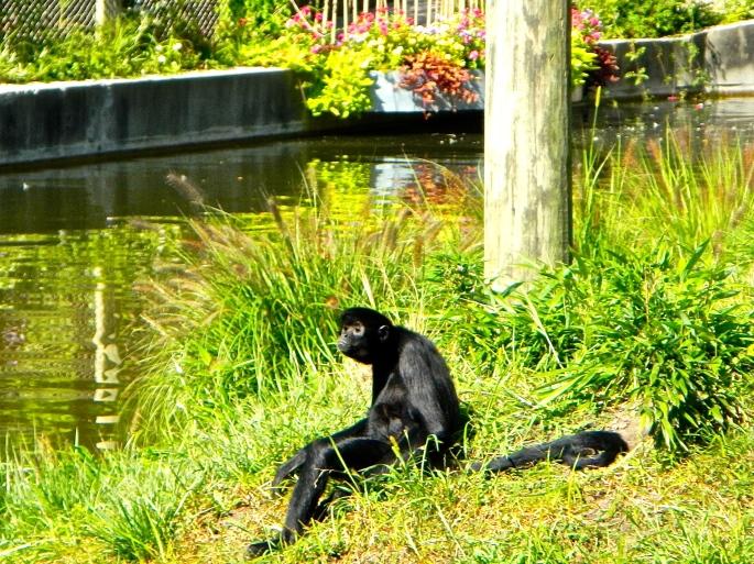 Monkey sitting on bank