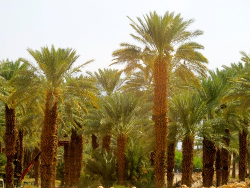 Oasis in Israel's Wilderness