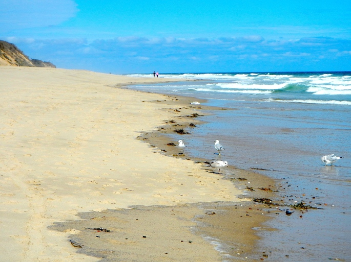 Seagulls along Cape Cod National Seashore