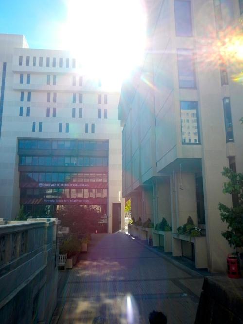 Strolling Harvard Med School Campus