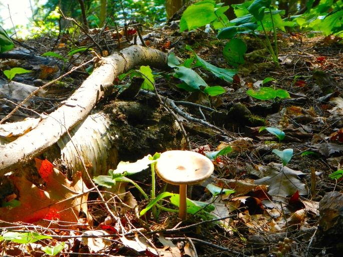 Toad stool