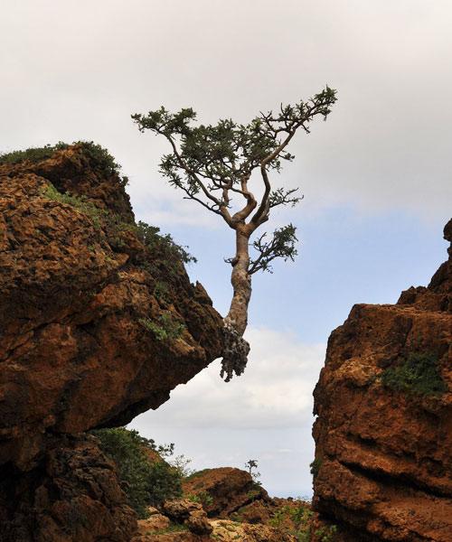 Tree on edge