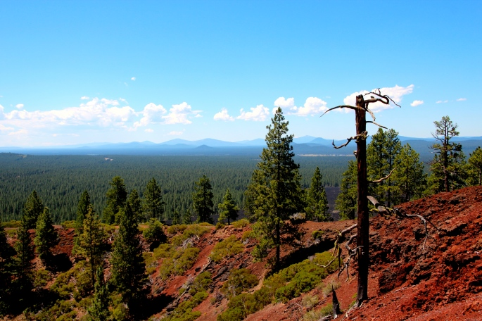 View from Lava Butte