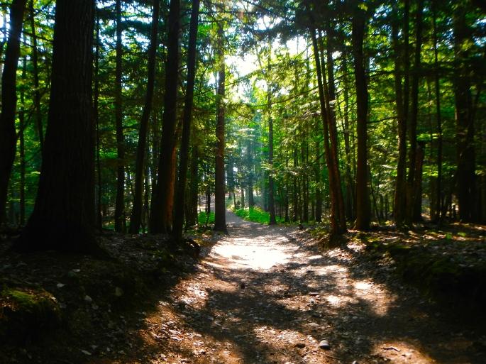 Wetmore Landing Trail
