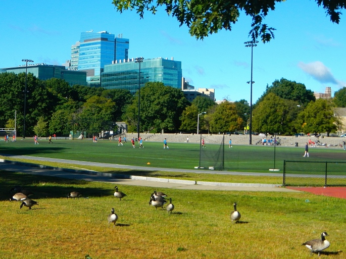 Boston Park Geese copy