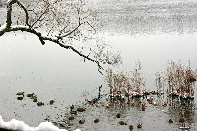 Even the ducks left!