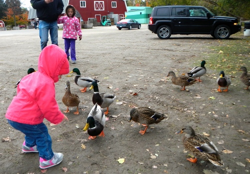 Feeding Ducks