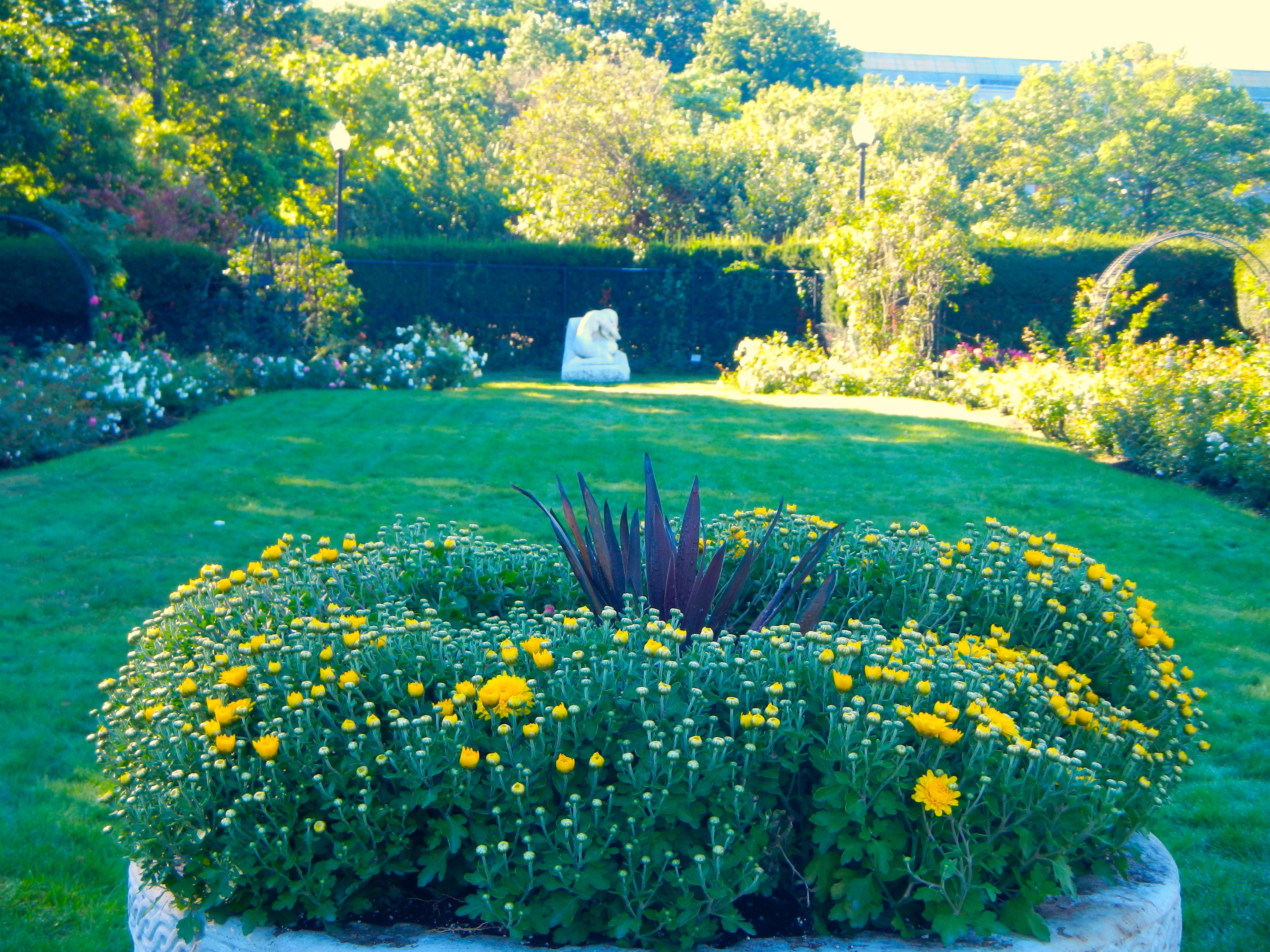 James P. Kelleher Garden flowers