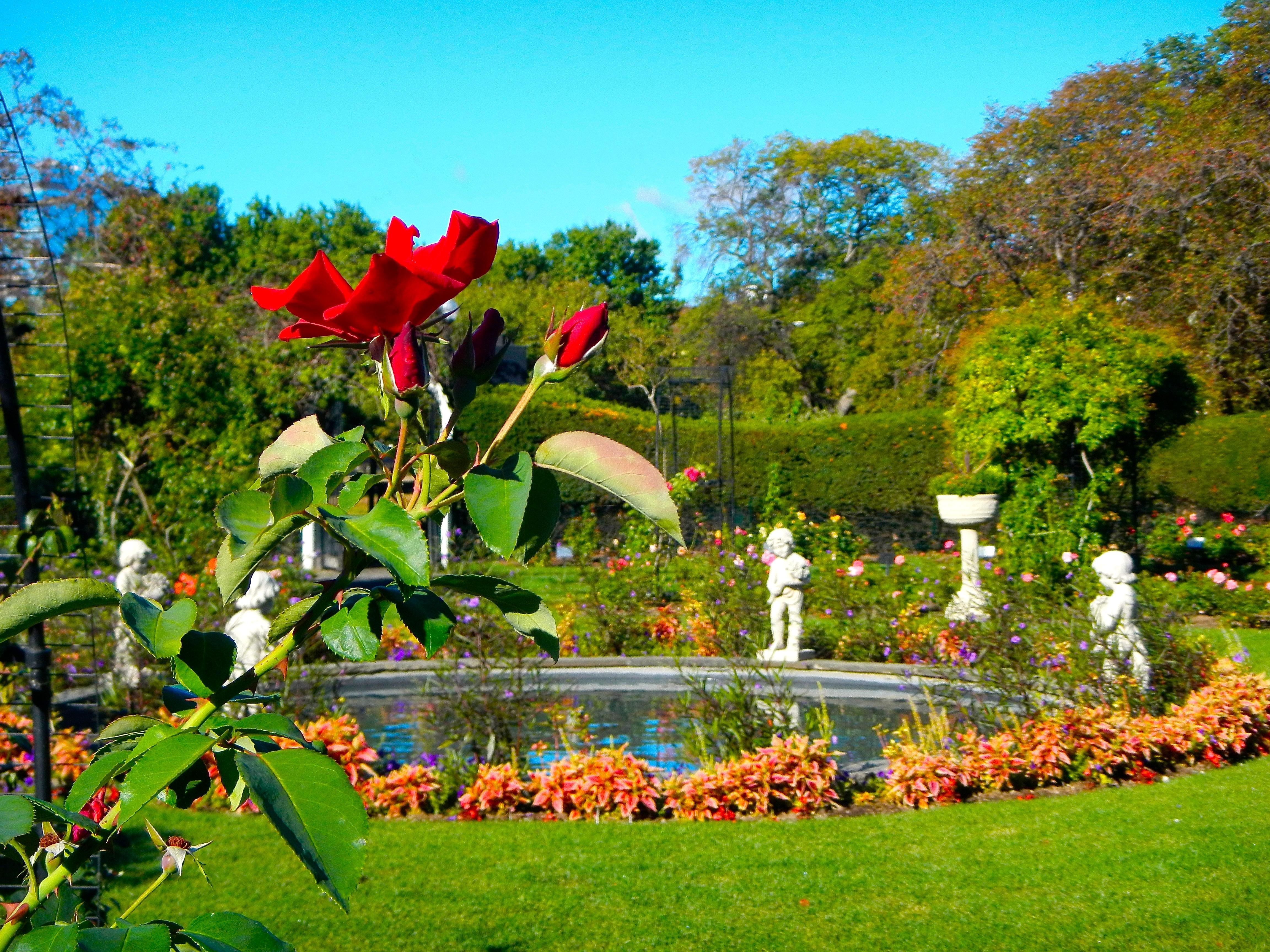 James P. Kelleher Rose Garden Statuary
