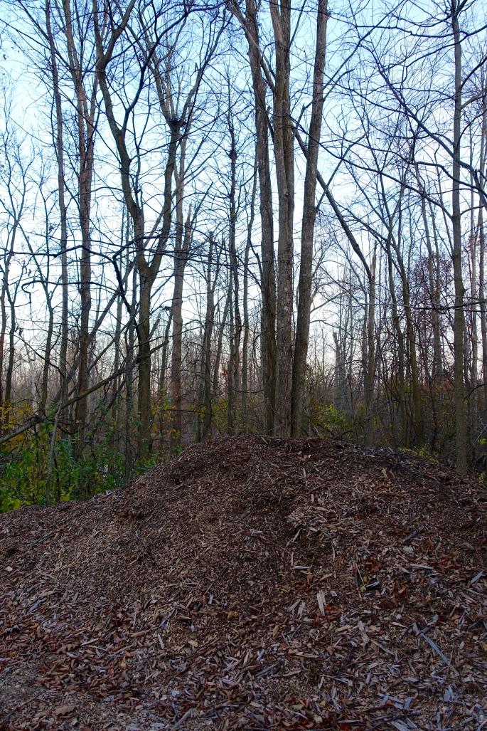Barren woods
