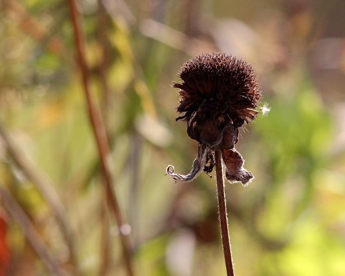 Brown Flower copy