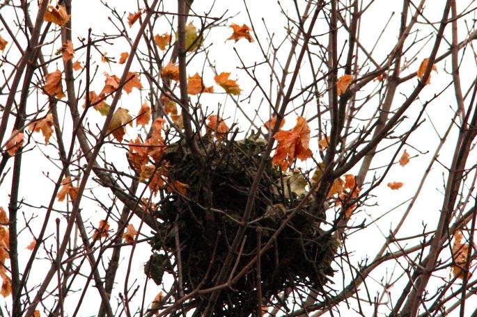 Empty Nest 2