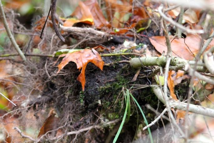 Empty Nest near ground