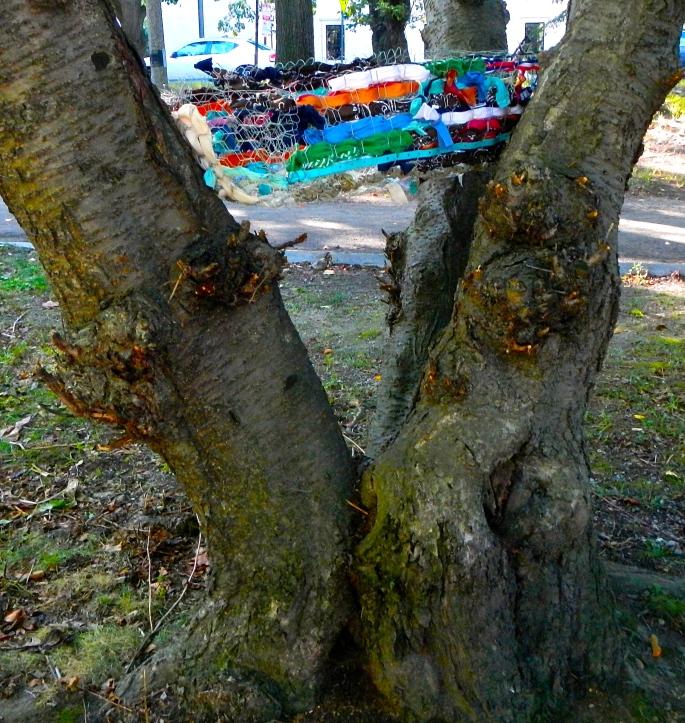 Empty Nests in tree