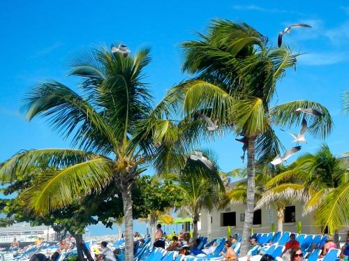 Great Stirrup Cay Palms