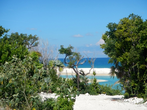 Great Stirrup Cay Vegetation