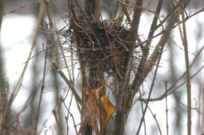 November. Empty Nest