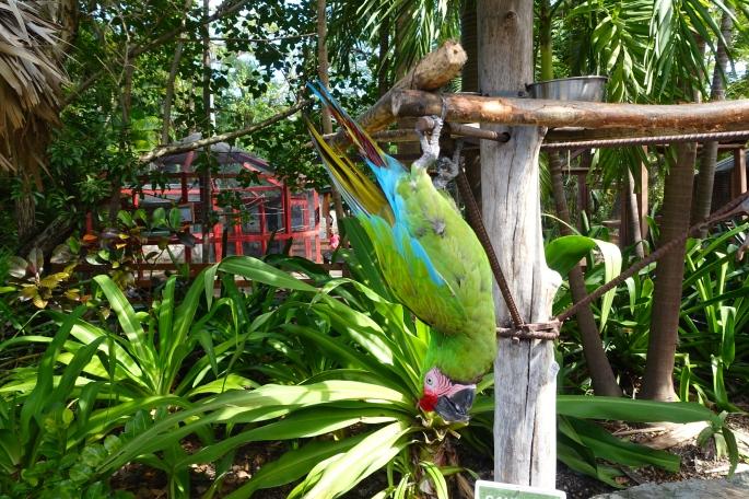 Parrot Upside Down