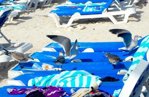 Seagulls having breakfast