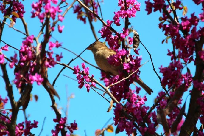 Small bird in flowering tree