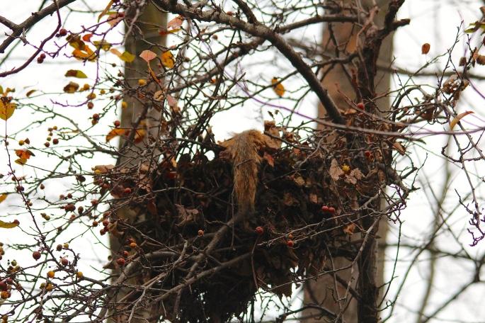 Squirrel on nest