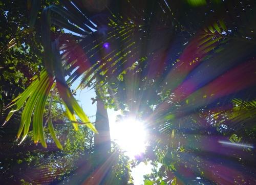 Sun behind palms close up