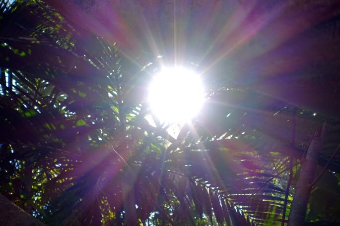 Sun behind palms closer