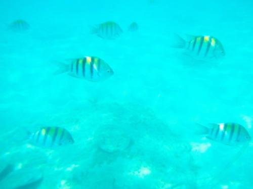 Underwater snorkling