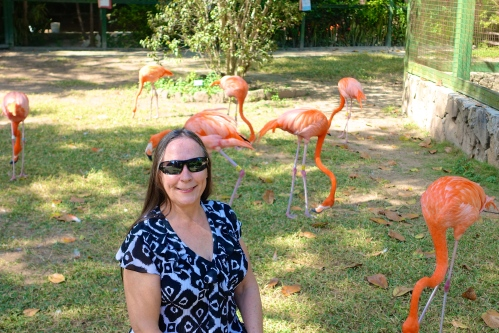 Ardastra Zoo Flamingoes