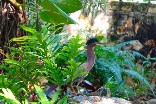 Exotic bird. Wild
