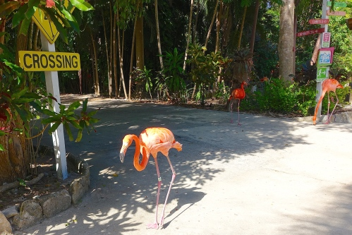 Flamingo Crossing. Ardastra Park