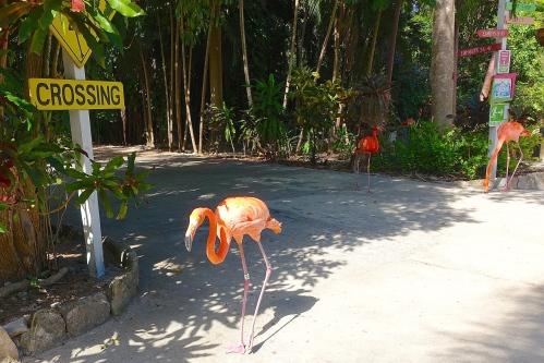 Flamingo Crossing. Ardastra Park