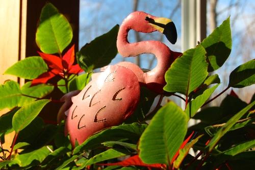 Flamingo in Garden Room