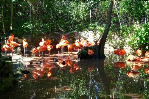 Flamingo Pool+6 11.14.14