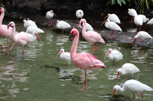 Flamingos + 1.29.14