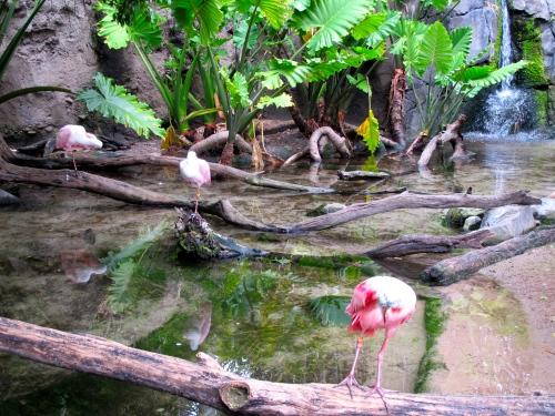 Flamingos having fun