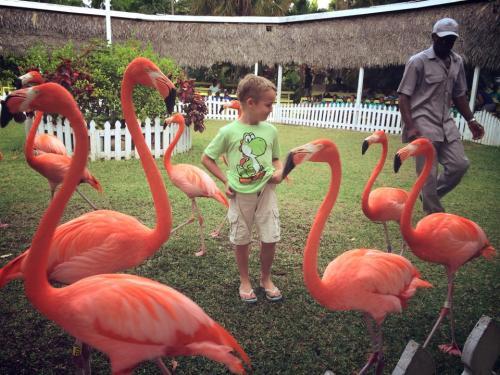 Flamingos. Reuben
