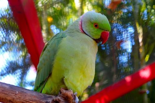 Green Parrot 11.14.14