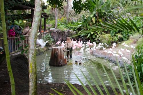Group of flamingos demo