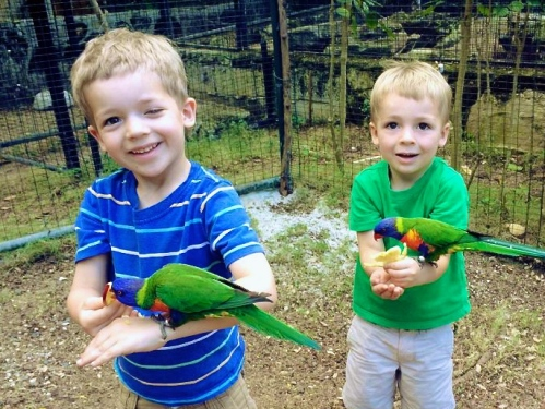 Lorikeets with children