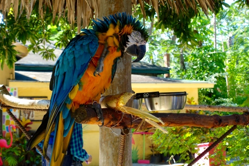 Macaw+6 Grooming 11.14.14