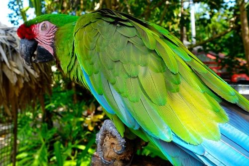 Macaw+9 11.14.14