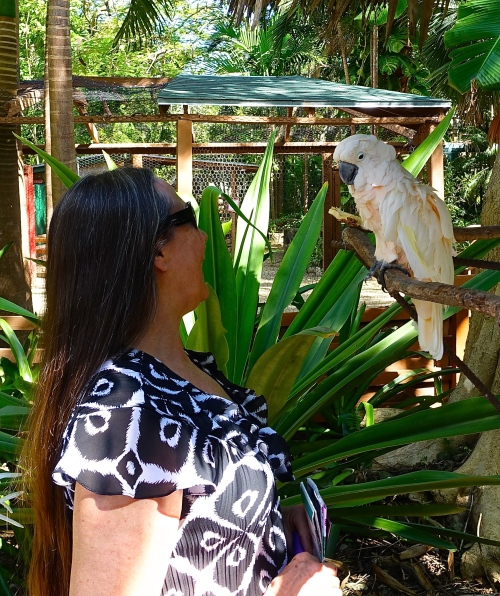 Talking to parrot