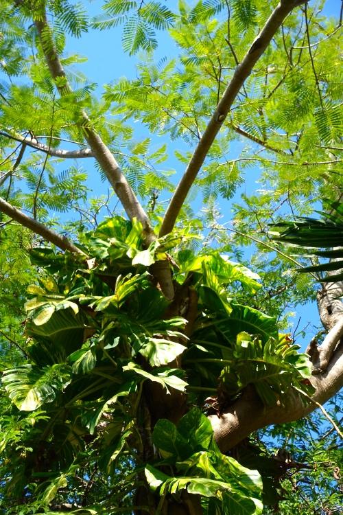 Tangled vines on palm tree